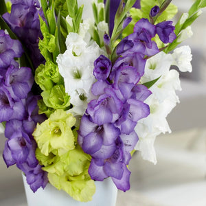 Gladiolus Green, Purple & White Collection