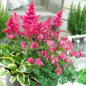 Astilbe, hosta, dicentra pink collection