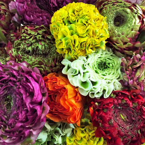 products/Italian_Ranunculus_Pon-Pon_Mix.SHUT.jpg