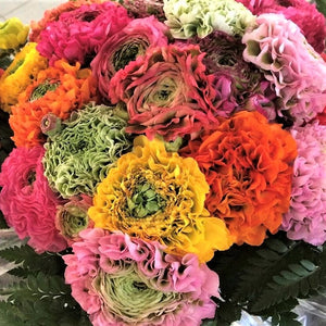 products/Italian_Ranunculus_Pon-Pon_Mix.jpg