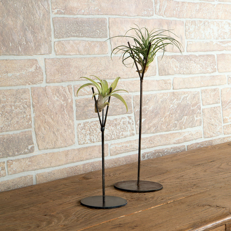 Air Plant Metal Stand Duo - FREE Shipping!