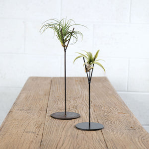 Metal Air Plant Stand Duo with 2 Air Plants