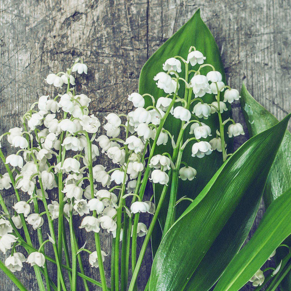 Lily Of The Valley Bouquet: 6 Flowering Lily Of The Valley