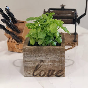 Herb Gift in a Reclaimed Wood Cube
