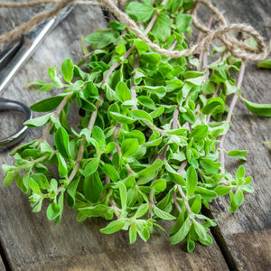 Sweet Marjoram bunch on a table