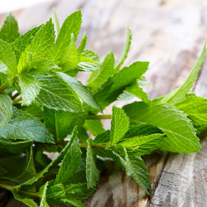 Spearmint Plant on a table top