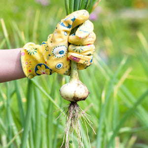 holding an onion in the garden