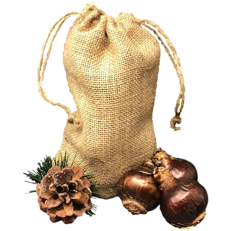 Paperwhite Gift in a Festive Burlap Bag - FREE SHIPPING!