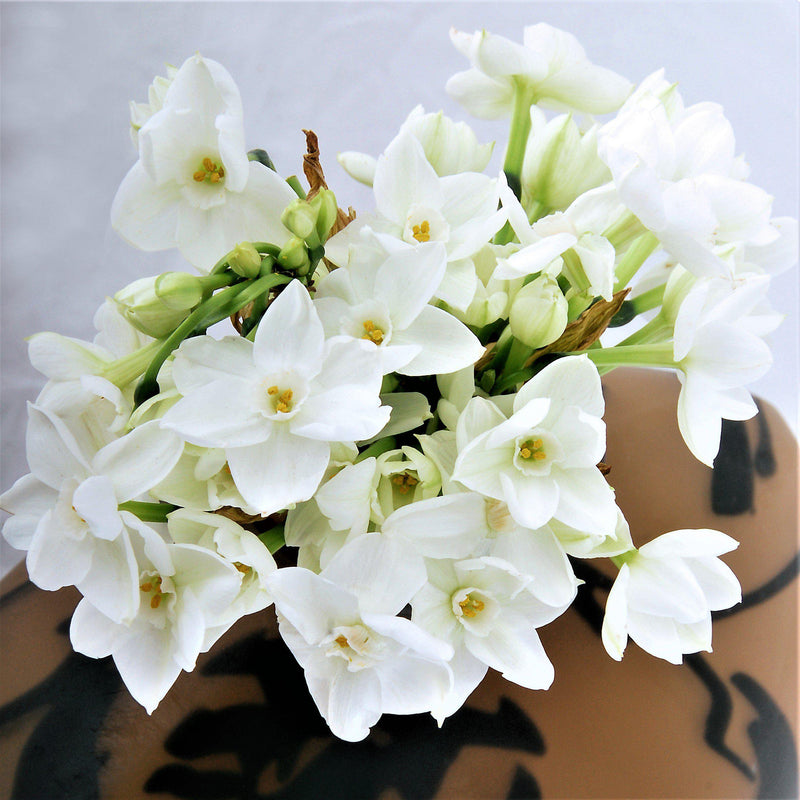 Inball Paperwhites