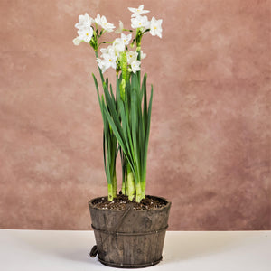 products/Paperwhites_Orchard_Bucket_wHandle.TL.jpg