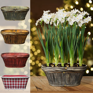 products/Paperwhites__Baskets_Parent.DD.jpg