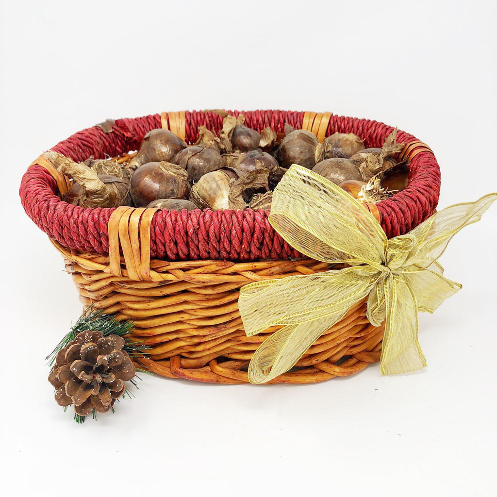 Paperwhite Wicker Gift Basket