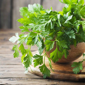 Italian Parsley in a bowl