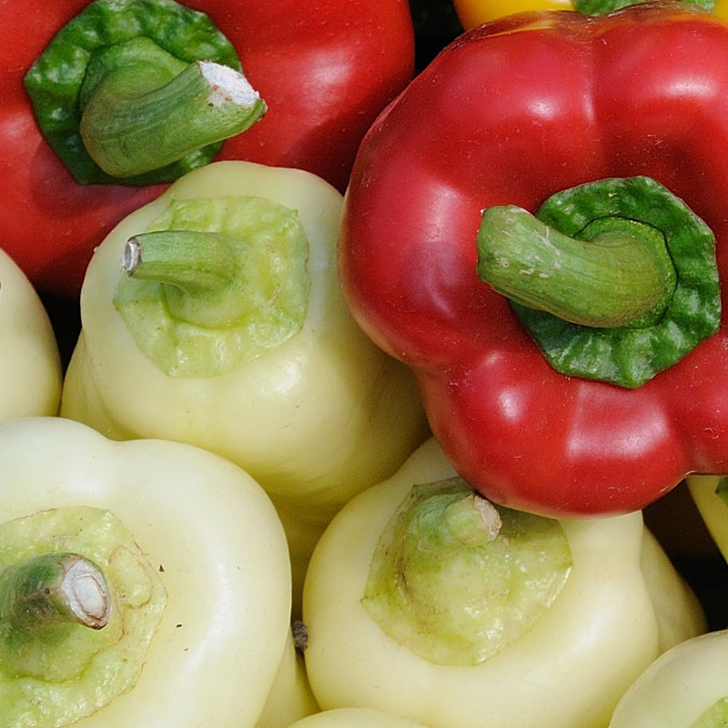 Close up group of roumanian rainbow peppers