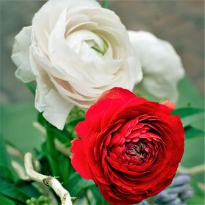 products/Ranunculus_Romance_Collection_Web.SHUT.SQ.jpg