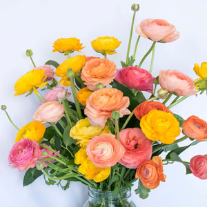 Ranunculus Tecolote® Tropical Sunset Collection