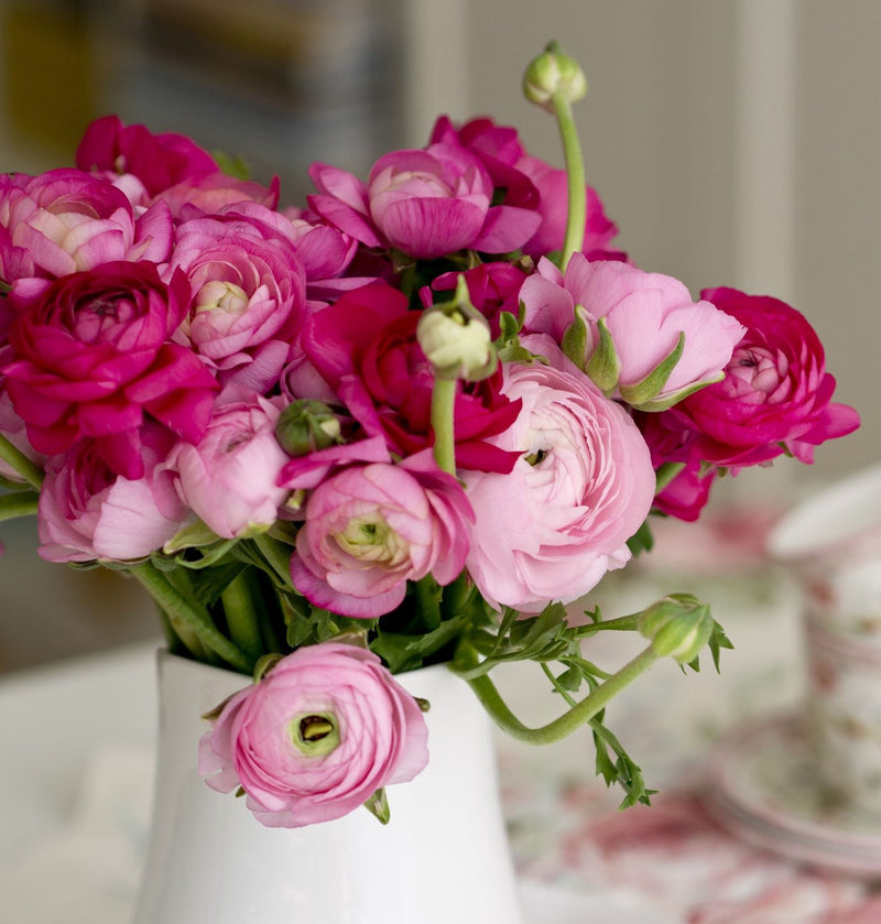 Ranunculus Tecolote Very Berry Collection