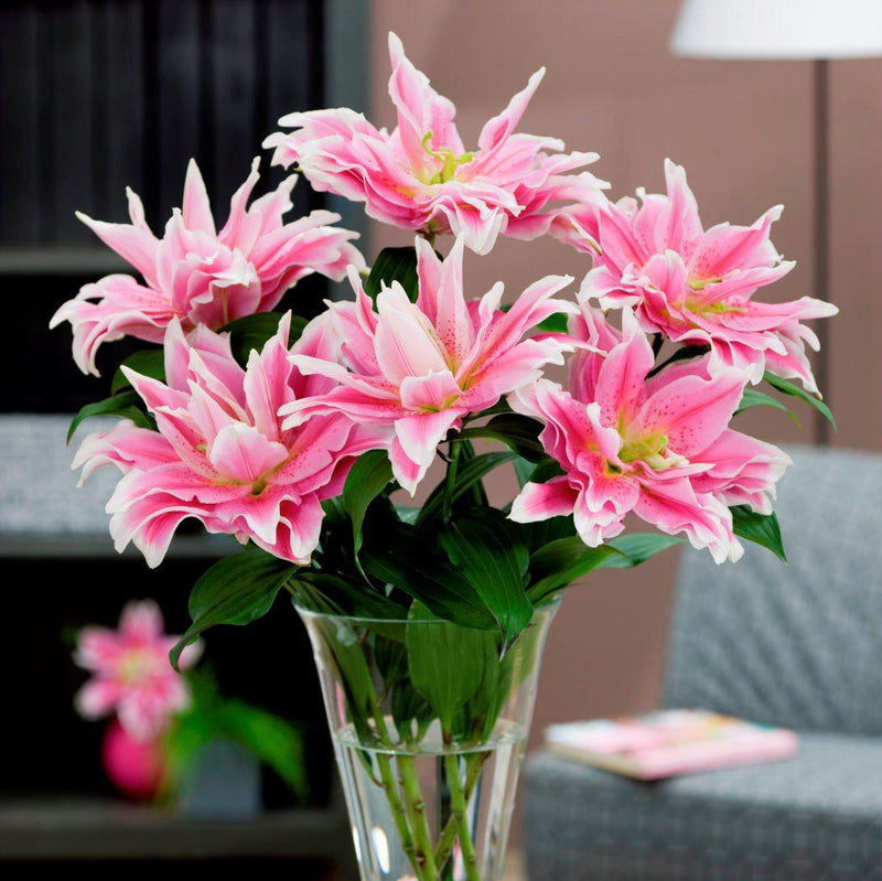Pink Pollen-free Lily Flowers