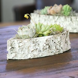 Succulents in a White Birch Boat