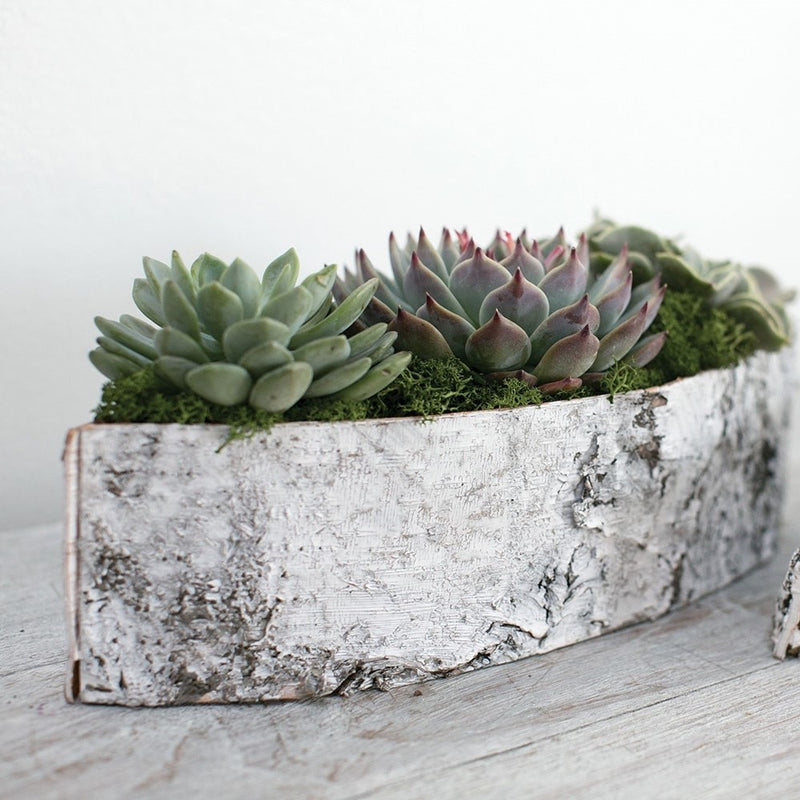 Succulent houseplant gift