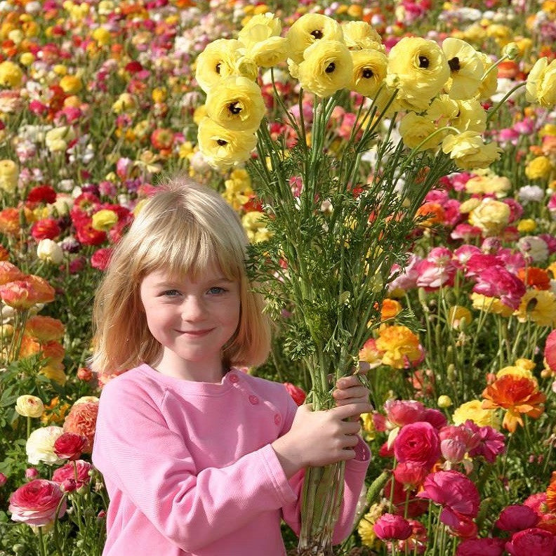 Girl with Ranunculus Flowers in Field