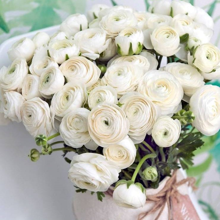 Italian Ranunculus Success Rio