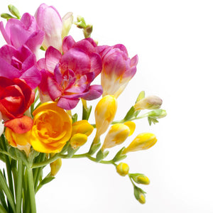 Freesia Tropical Sunset Collection
