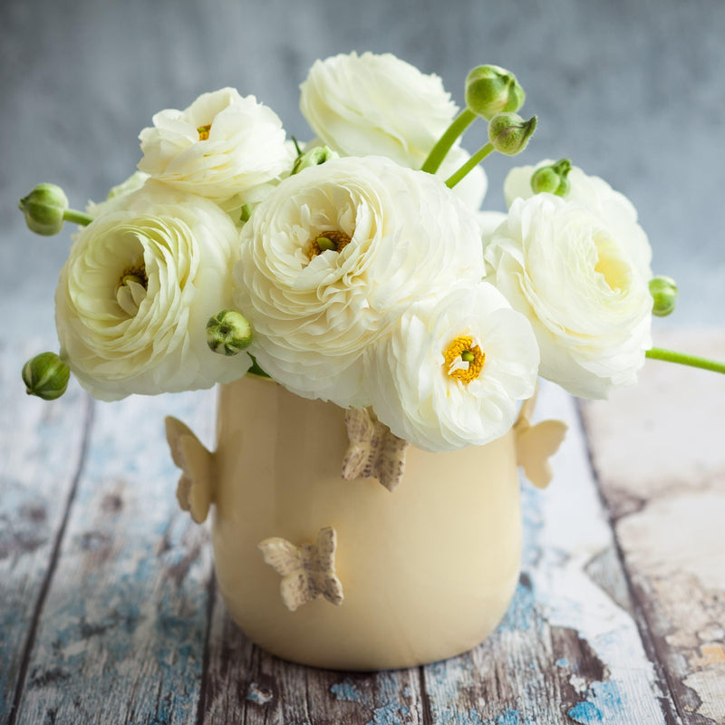 White ranunculus flowers in vase