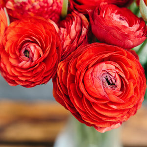 Red Ranunculus in Vase