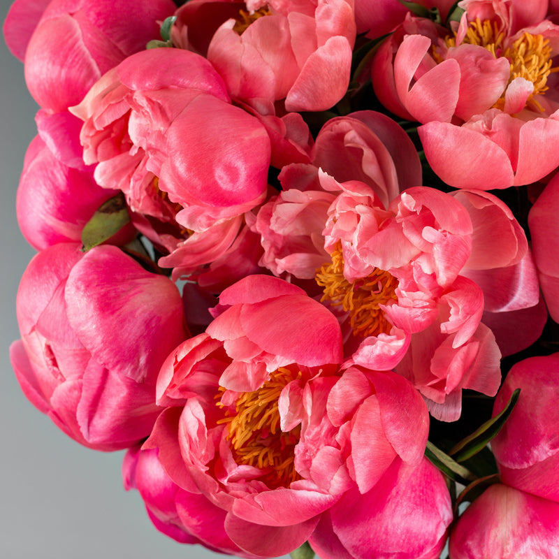 Peony Coral Charm (Fragrant) flowers in a vase