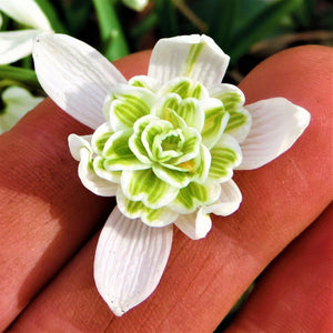 products/sq1Galanthus_Nivalis_Flore_Pleno.SHUT_3.jpg