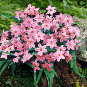 products/sqIpheion_Charlotte_Bishop.DV.jpg