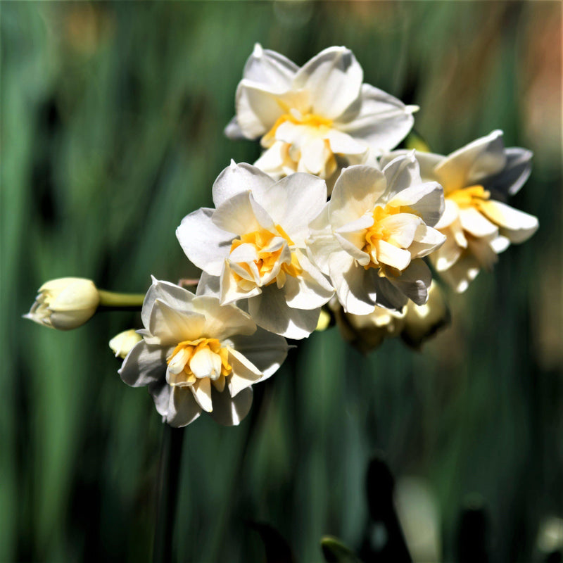 Narcissus Constantinople