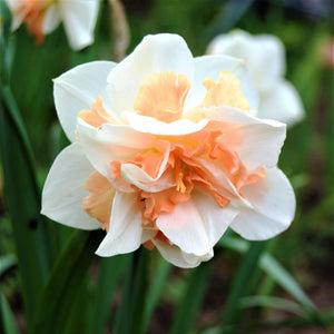 products/sqNarcissus_Replete.SHUT_4.jpg