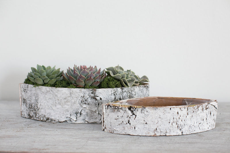 White birch boat planted with succulents