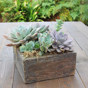 Colorful Succulent Garden in Reclaimed Wood Planter