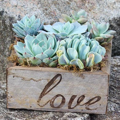 Succulent Garden in Reclaimed Wood Planter with Love - FREE Shipping!