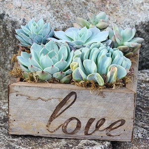 Succulent Garden in Reclaimed Wood Planter with Love