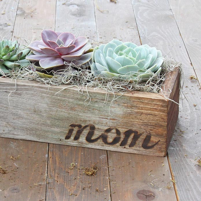 Succulents Trio in Reclaimed Wood Planter with Mom - FREE Shipping!