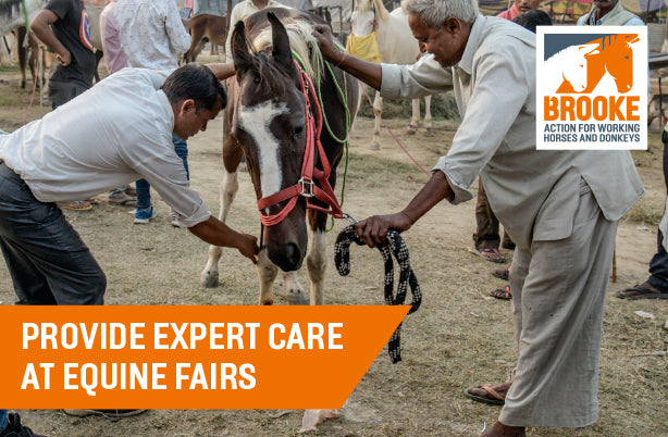 Provide expert care at equine fairs