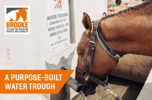 A purpose-built water trough