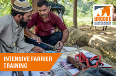 Intensive farrier training