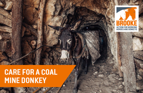 Care for a coal mine donkey