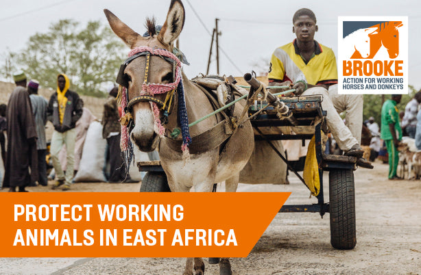Protect working animals in East Africa