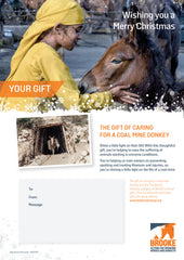 The gift of caring for a coal mine donkey
