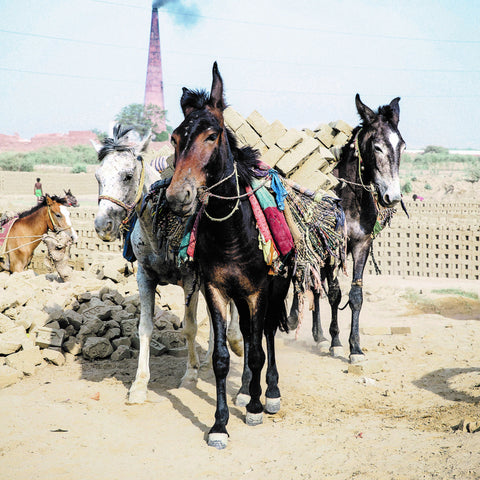 Build a better life for a brick kiln mule