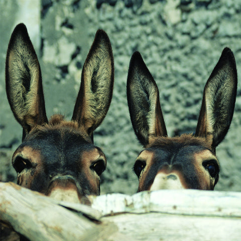 Inquisitive donkeys