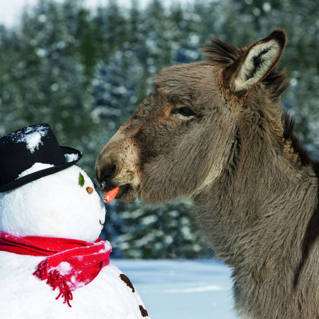 Donkey and his snowy friend
