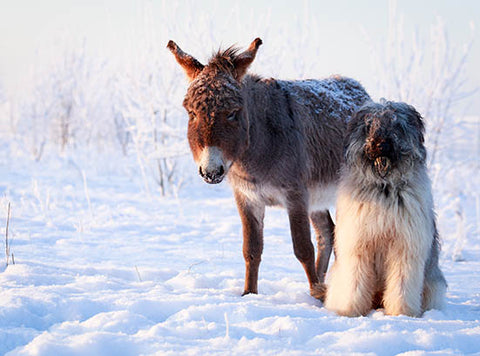 Donkey and his friend