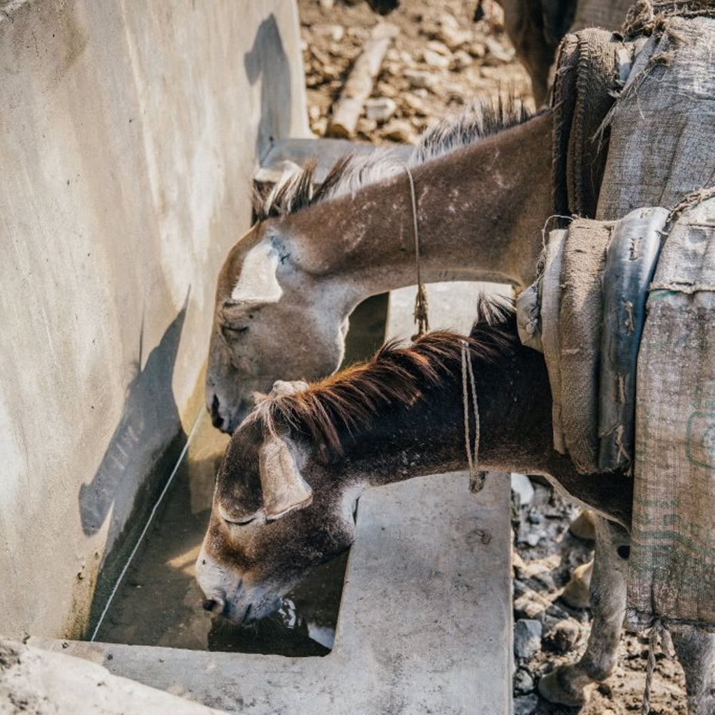 Give hard-working animals water all year round